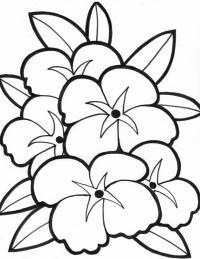 Красивый цветок Раскраски детские с цветами