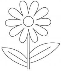 Садовая ромашка Раскраски детские с цветами