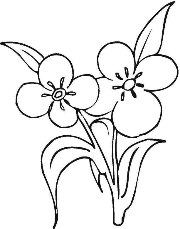 Фото красивых раскрасок цветов