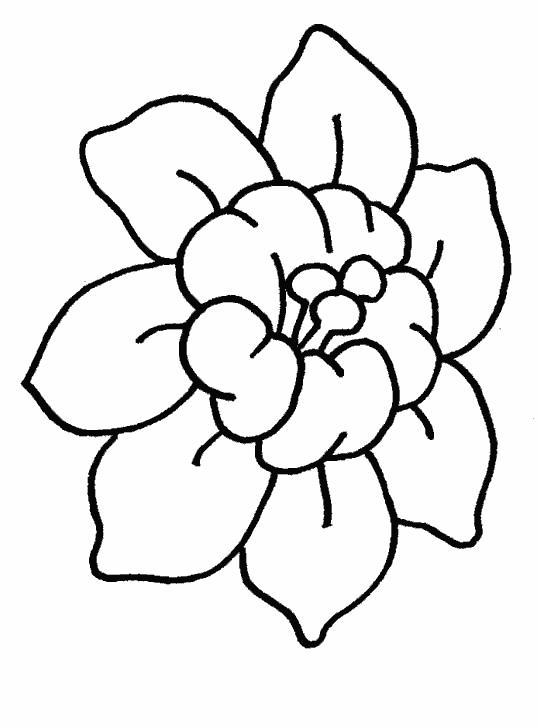 Красивый цветок Для детей онлайн раскраски с цветами