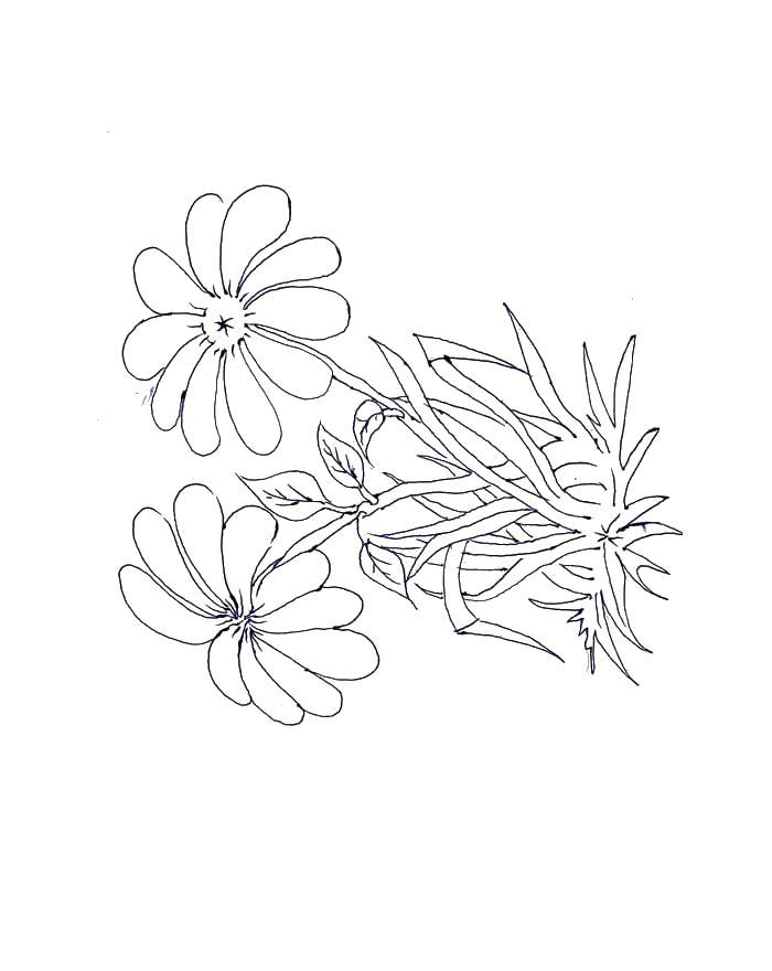 Полевой цветок цветы раскраски онлайн бесплатно