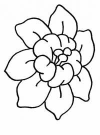 Красивый цветок