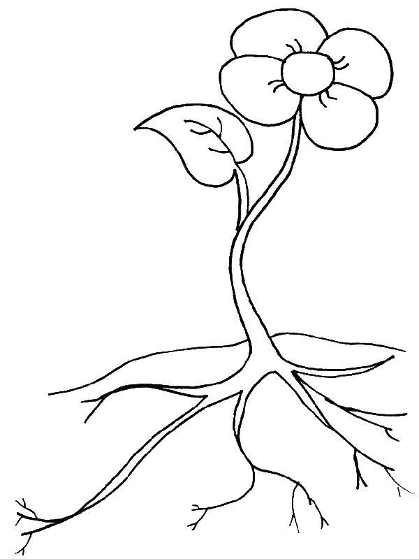 Цветок и его корень для маленьких строение цветка Раскраски цветы для детей