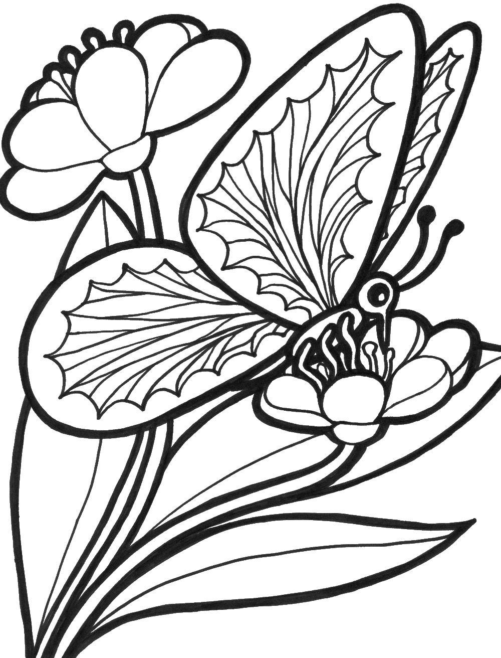 Цветок с бабочкой Раскраски цветочки для детей бесплатно