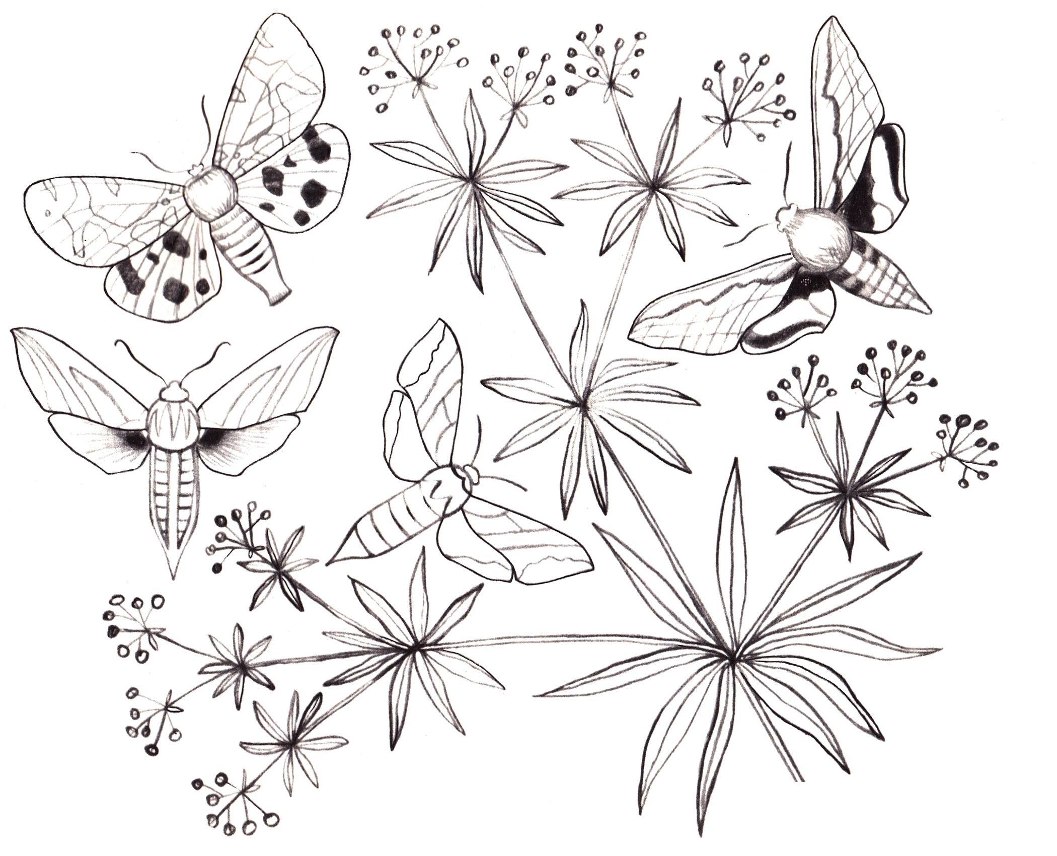 Раскраска для девочек бабочки - 7