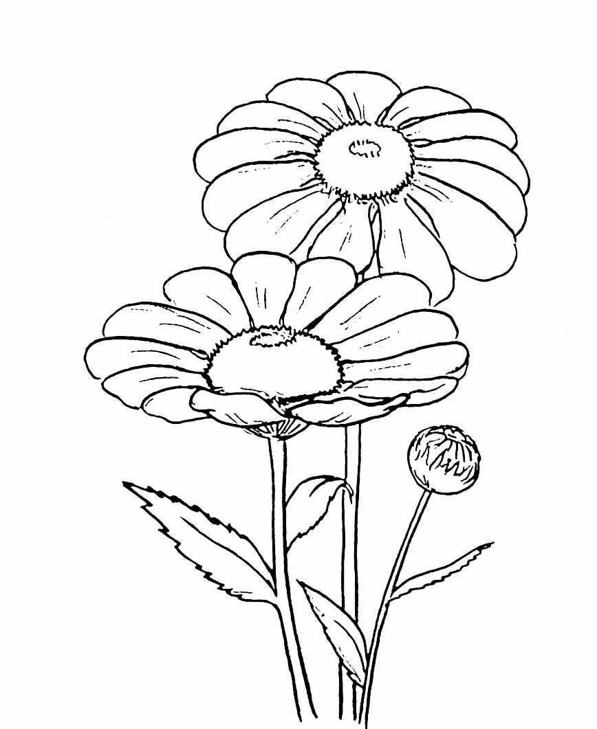 Цветы картинки раскраски для детей - 1