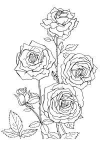 Раскраски роз с шипами