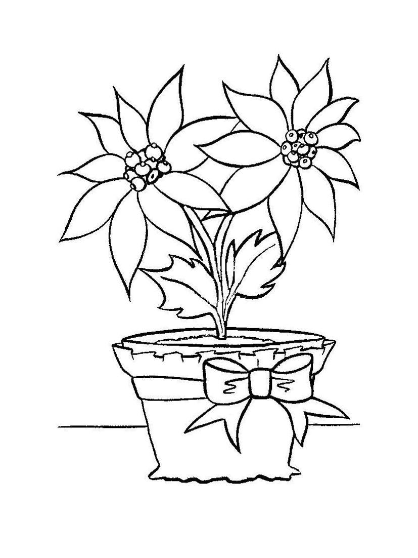 Бесплатные раскраски цветов цветок в горшке