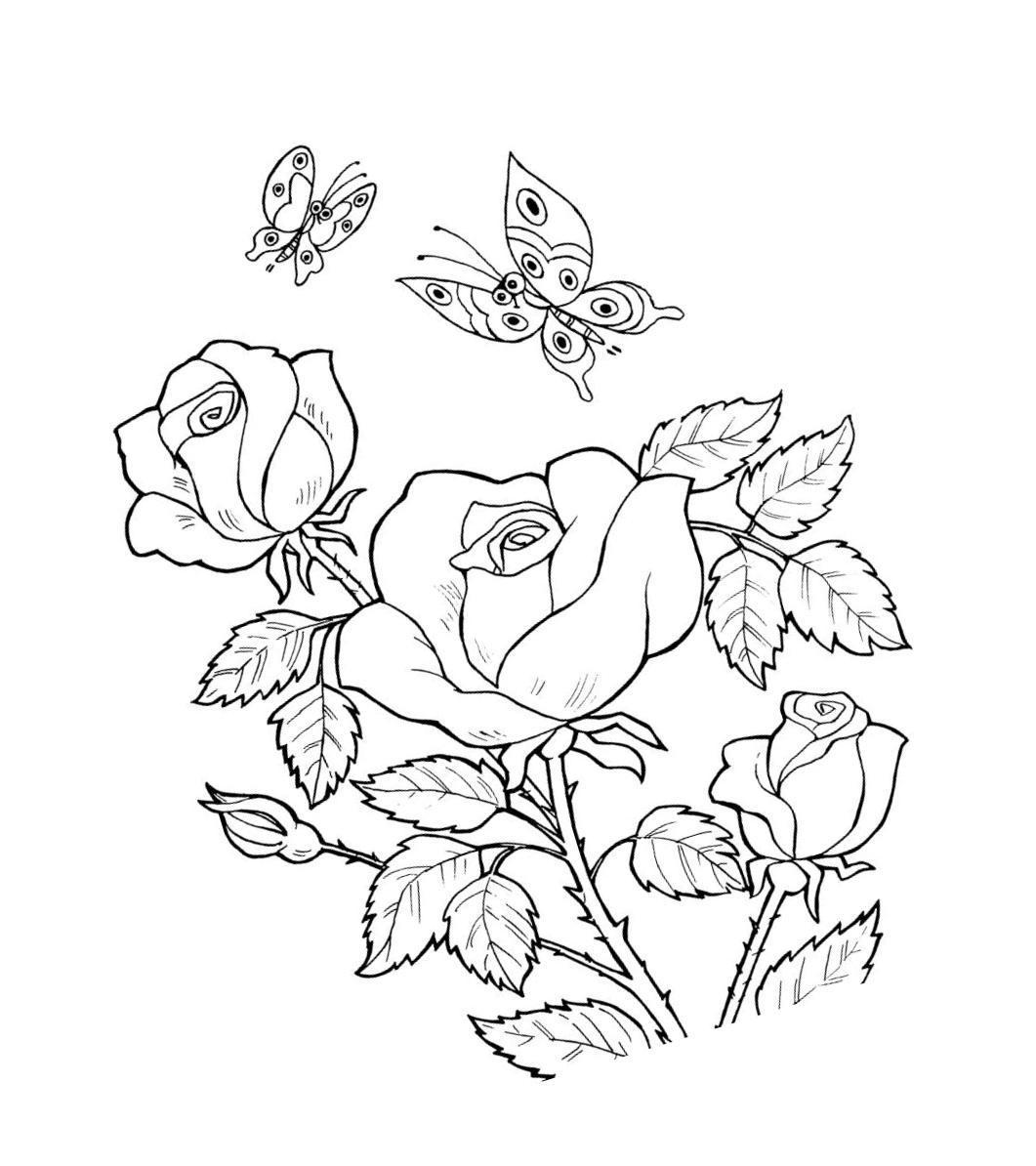 Розы Розы с бабочками раскраски цветы