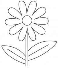 Раскраски цветы ромашки полевые цветы