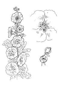 Экзотический цветок