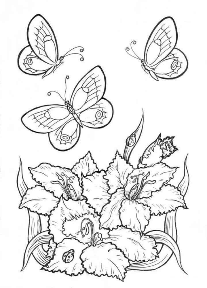 Бабочка Жасмин раскраски цветы