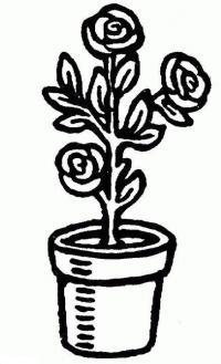 Цветы в горшке, роза