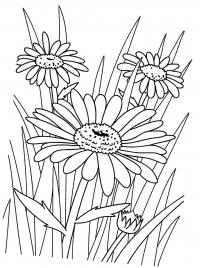 Ромашки в поле. скачать раскраски цветы