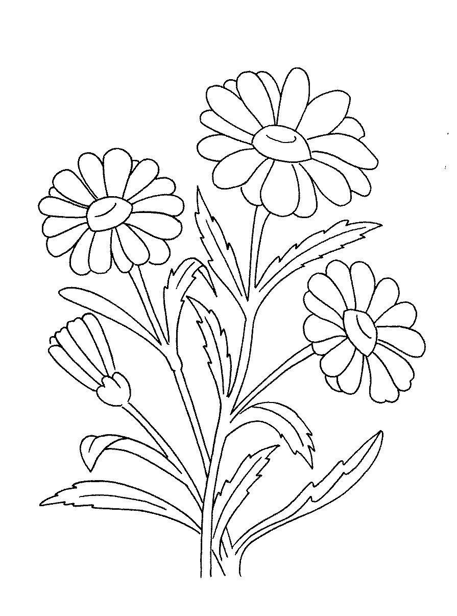 Раскраски цветы ромашки распечатать