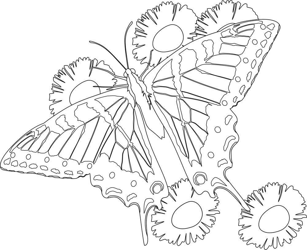 Бабочка летит над цветами