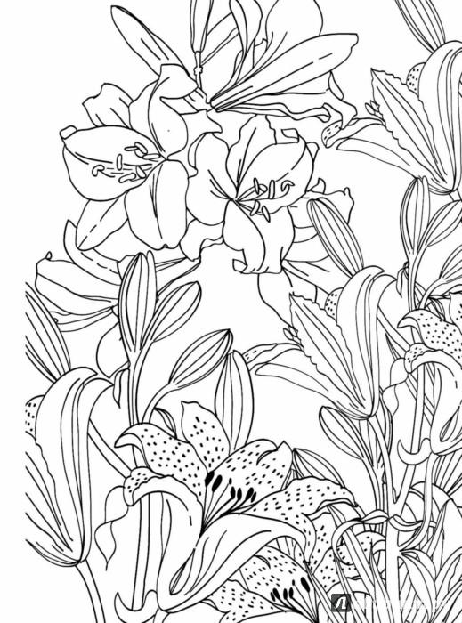 Раскраски антистресс с лилиями