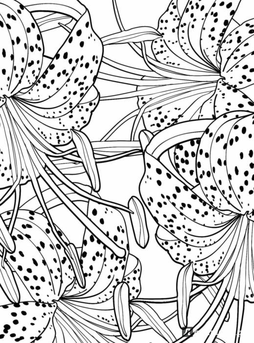 Раскраски антистресс, тигровые лилии
