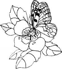 Бабочка на очень красивом цветке
