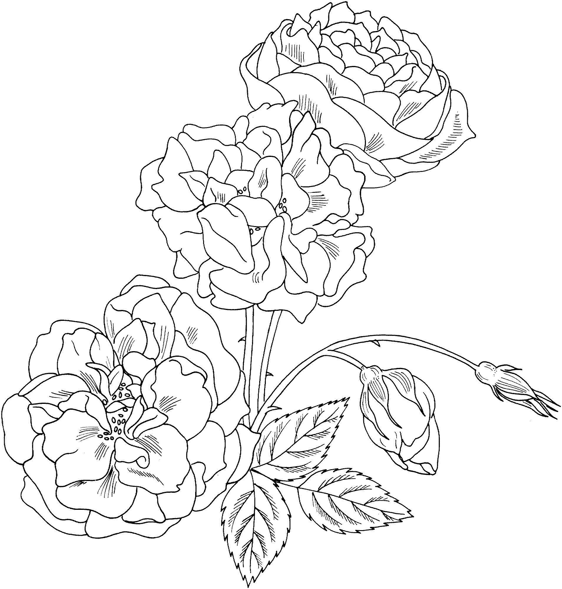 Красивые розы для узоров