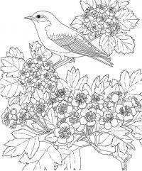 Птица на цветущей ветке