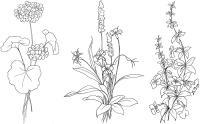 Экзотические цветочки