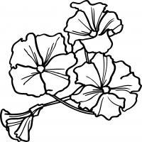 Цветочки вьюны
