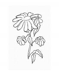 Цветы с опущенными лепестками