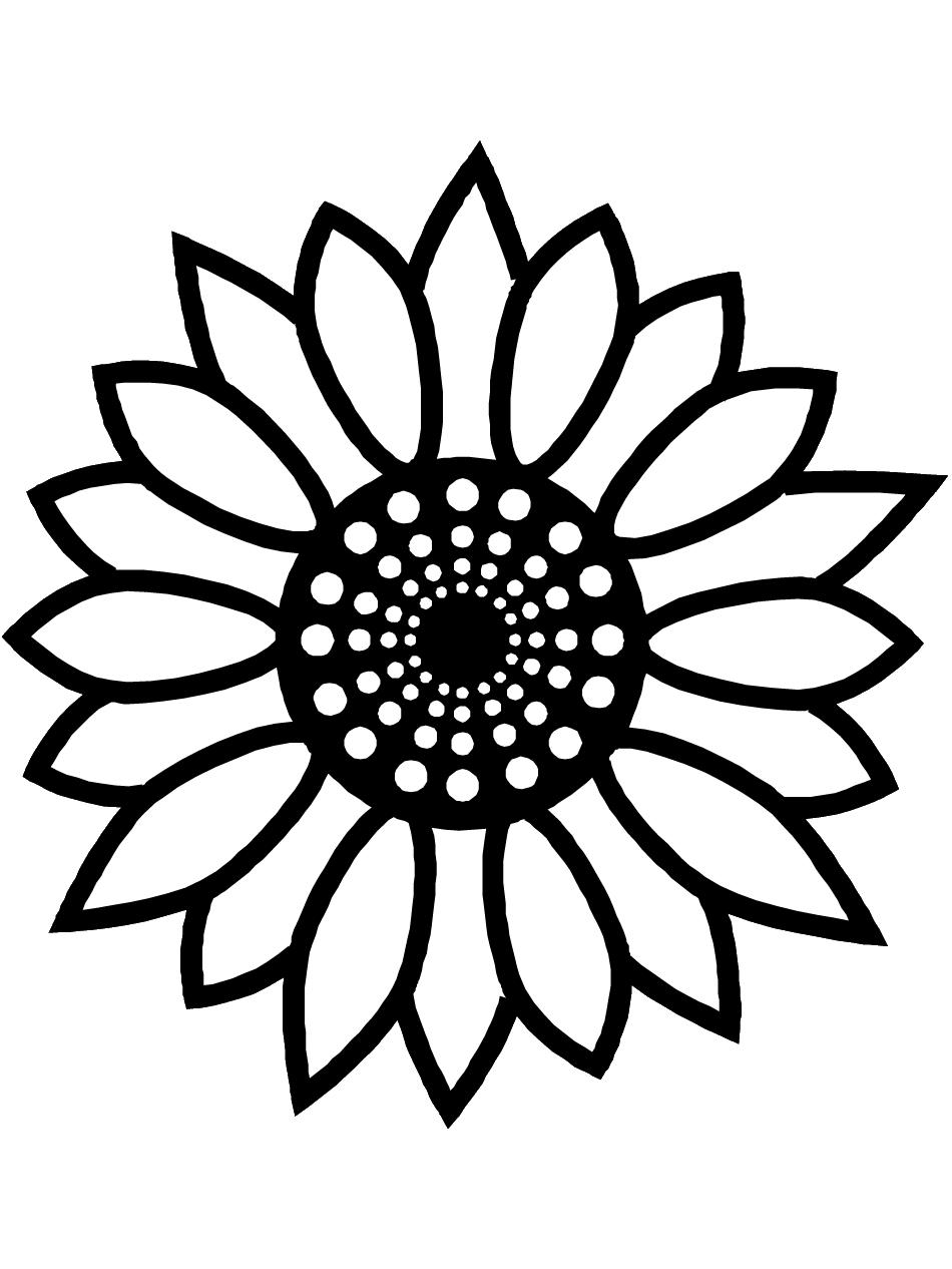 Цветы подсолнух