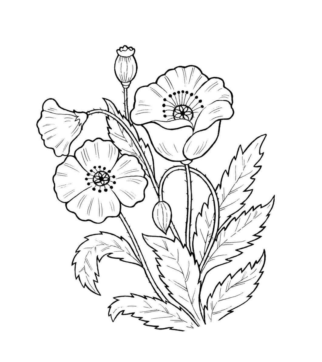 Полевые цветы Раскраски растения детская раскраска растения,  цветы раскраски цветы