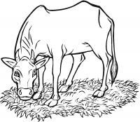 Корова на лугу жует газон
