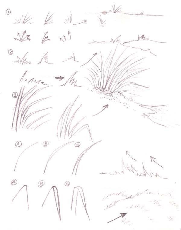 Как нарисовать различную траву