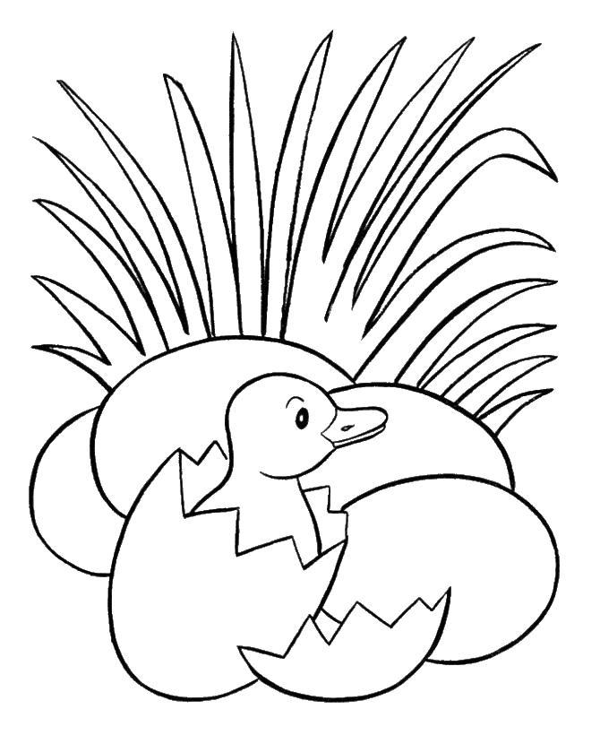 Цыпленок вылупился в траве из яйца