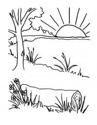 Рассвет у озера. красивые полевые трава и цветы