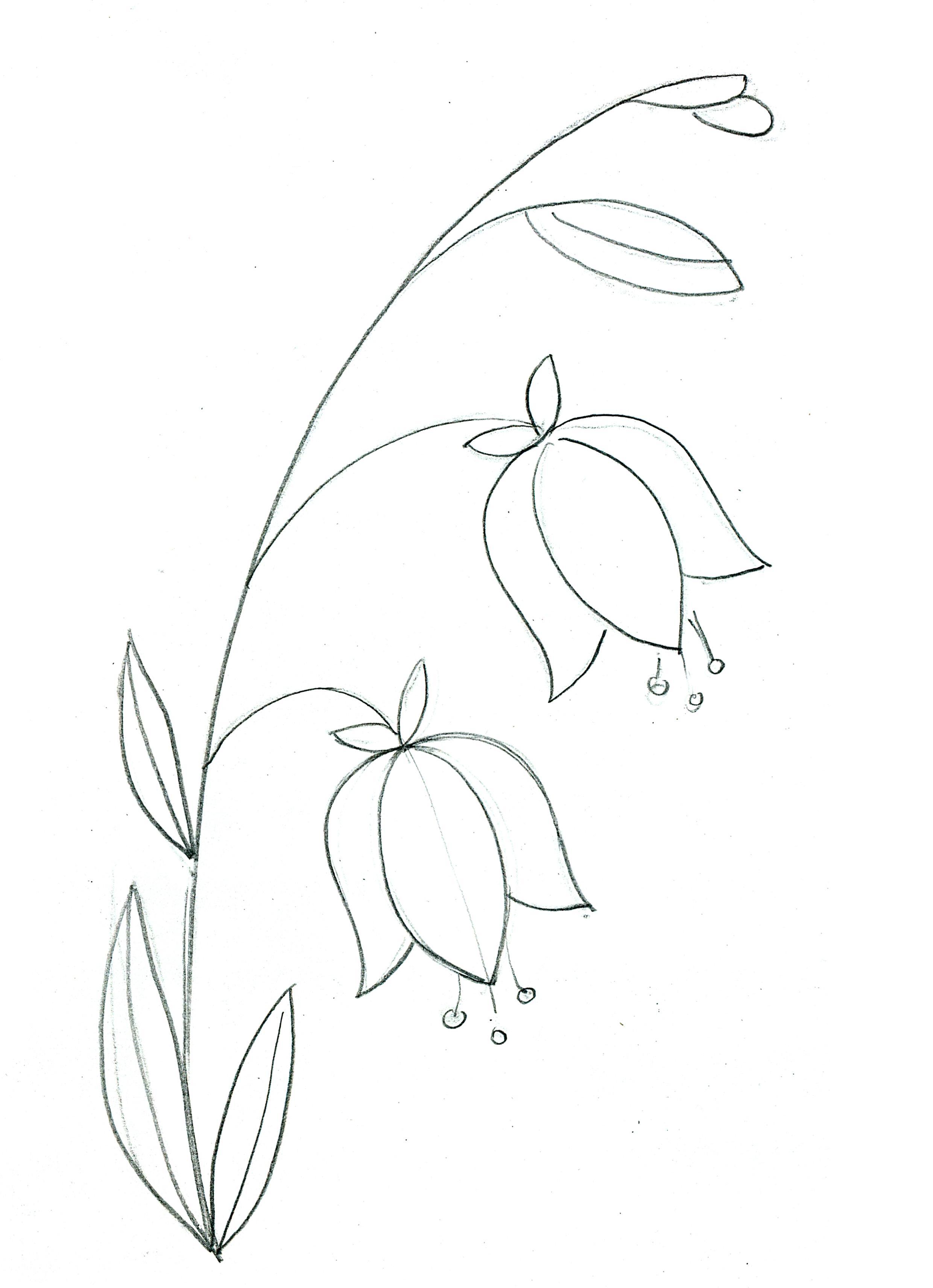 Рисуем цветок - колокольчик поэтапно цветными карандашами ...