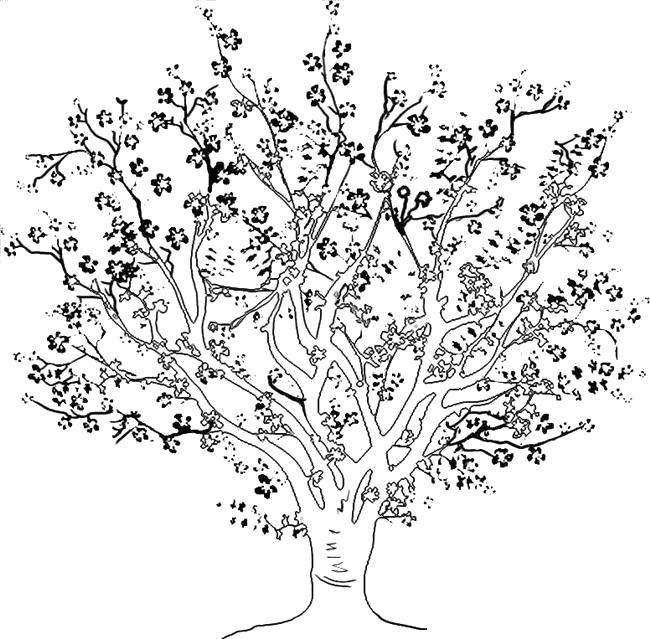 Большое цветущее дерево